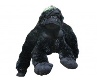 Black Chimp Teddy